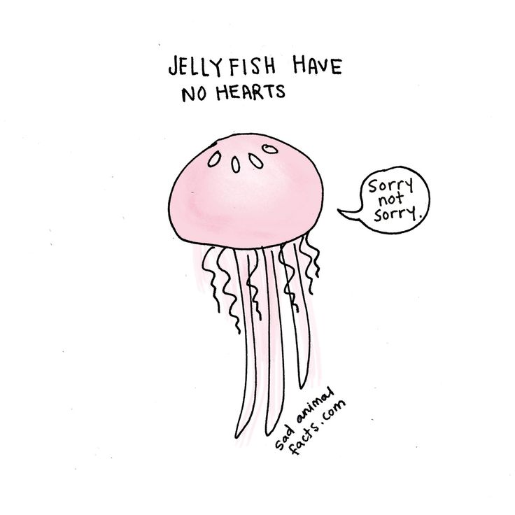 I've got some bad news about jellyfish. - http://sadanimalfacts.com/