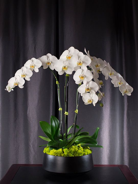 Orchid arrangements are a perfect holiday gift for your family, friends, host or hostess of the party you are invited to.