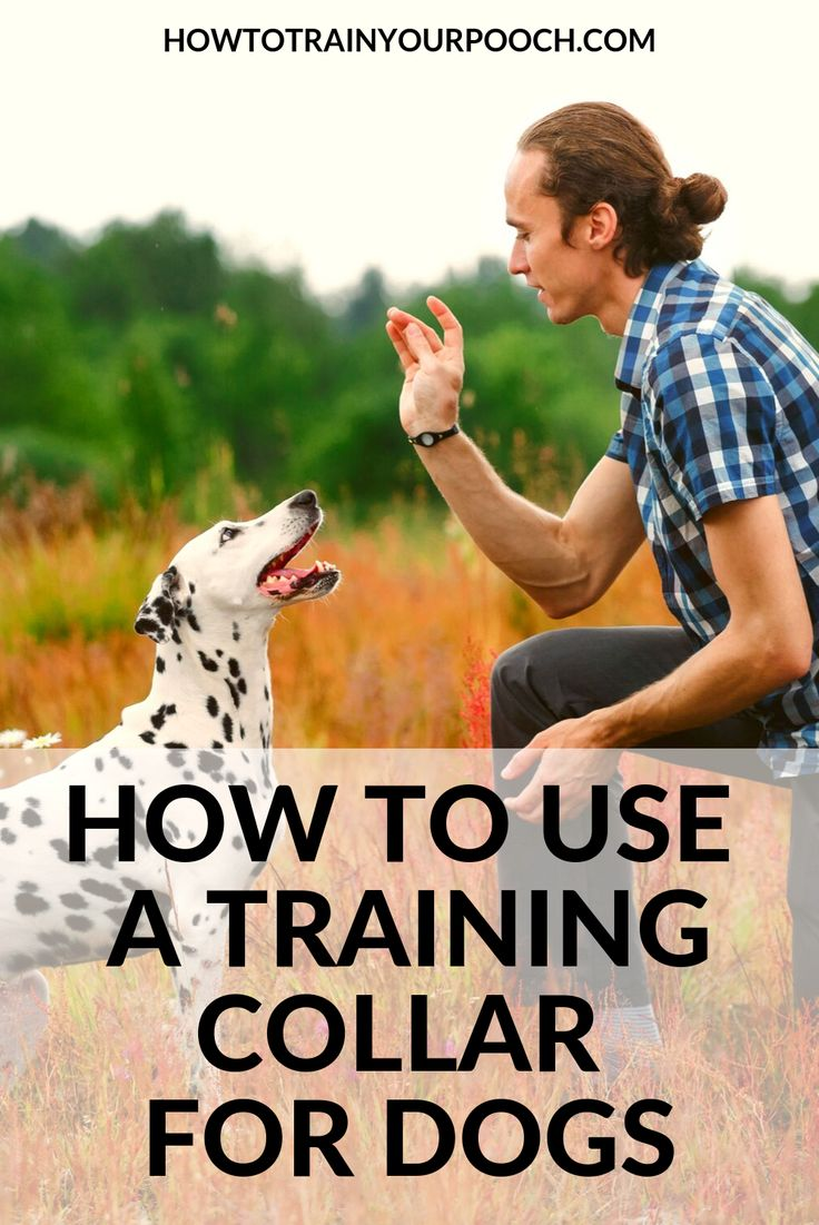 How to use a training collar for dogs dog training