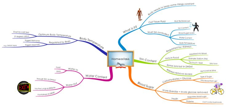 Homeostasis mind map - for GCSE Biology revision. Free to view/download.