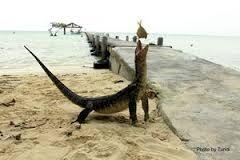 #PulauBiawak