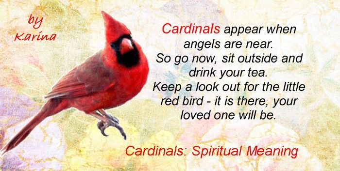 Cardinals Spiritual Meaning: Symbol Of Cardinal Birds, What It Means To Find One?