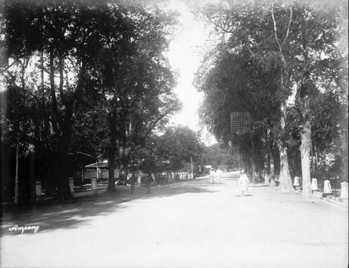 Het oude Simpang een typische oud Indische laan te Soerabaja 1885-1900 (COLLECTIE TROPENMUSEUM)