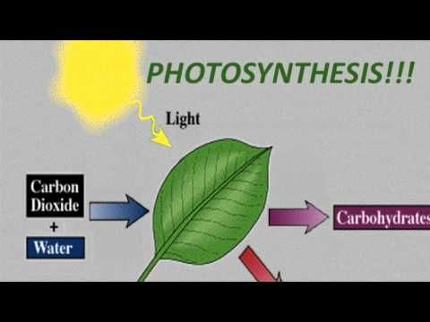 ▶ Photosynthesis Rap (50 Cent - In Da Club) - YouTube all ages science basic - awesome