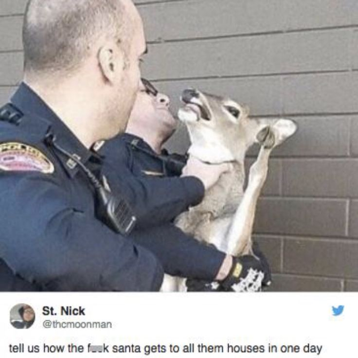 Lol This is the local Ozark, MO police department  getting a deer from the gas station.