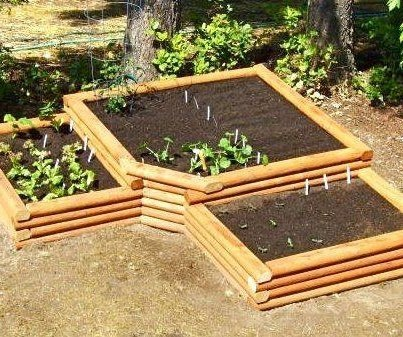 grow food not lawns - Google Search