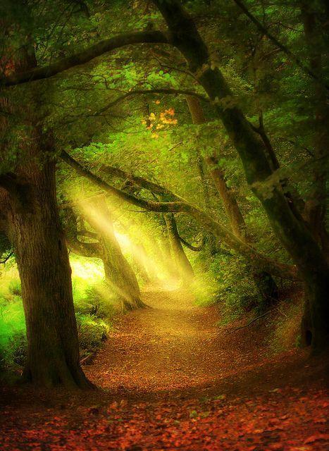 St. Catherine's wood, England photo via kdnet