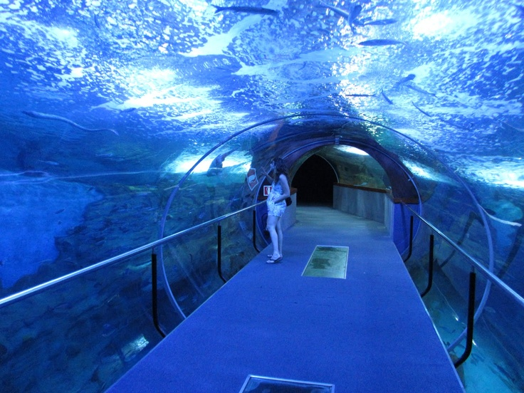 san sebastian aquarium spain underwater aquarium unique places pinterest underwater. Black Bedroom Furniture Sets. Home Design Ideas