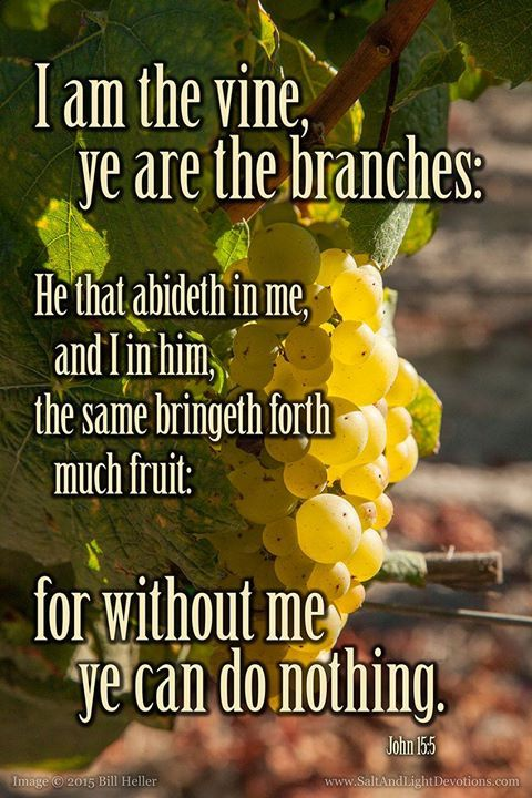 I am the true vine and my Father is the husbandman. 2Every branch in me that beareth not fruit he taketh away: and every branch that beareth fruit he purgeth it that it may bring forth more fruit. 3Now ye are clean through the word which I have spoken unto you. 4Abide in me and I in you. As the branch cannot bear fruit of itself except it abide in the vine; no more can ye except ye abide in me. 5I am the vine ye are the branches: He that abideth in me and I in him the same bringeth forth…