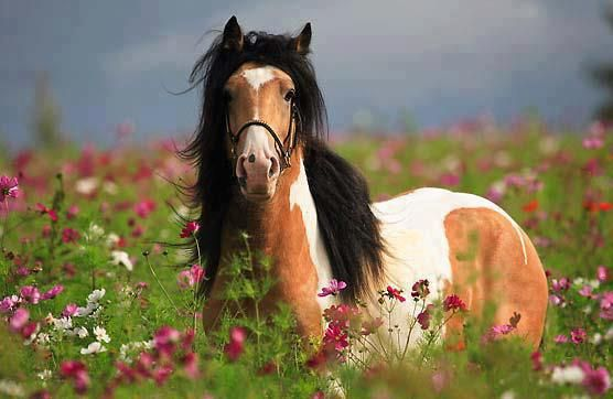 paint horse in a field of flowers horses pinterest beautiful may flowers and flower. Black Bedroom Furniture Sets. Home Design Ideas