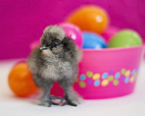 Easter Eggs and a Baby Chick by Lori Hildebrandt