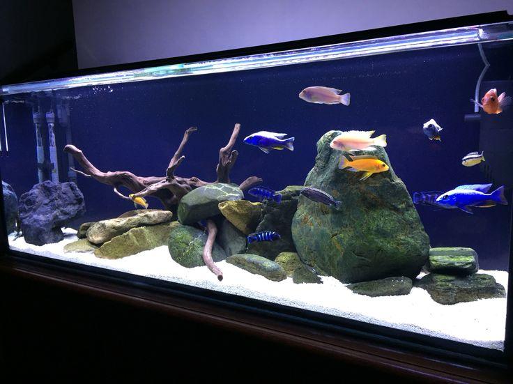 7 Best Aquarium Black Background Images On Pinterest Aquarium Ideas Fish Aquariums And
