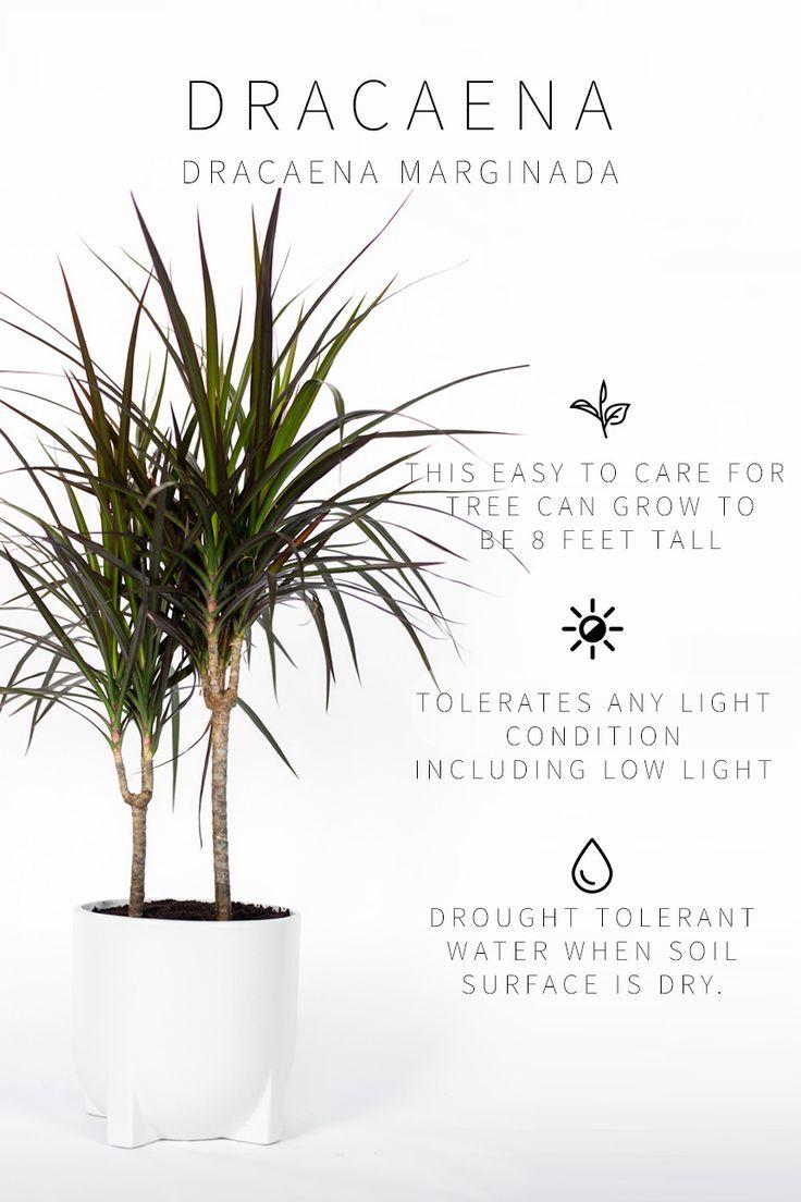 Master List Of Low Light Indoor Plants With Images Indoor