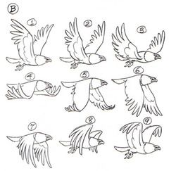 doubledrefs:  Making a short animation gif for today's Pokedex meme today so I'm stockpiling resources. Flight Cycle of a Bird picture from this article [X] More Bird in Flight Cycles andAnatomy[X] Animation Timing [X]