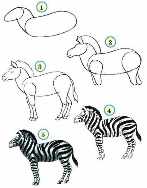 draw drawing zoo animals animal drawings zebra