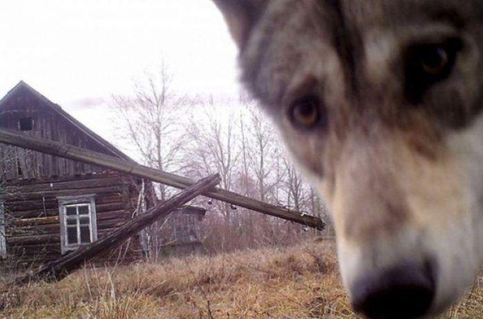 Ученые решили еще раз исследовать Чернобыль и увиденное привело их в шок https://zelenodolsk.online/uchenye-reshili-eshhe-raz-issledovat-chernobyl-i-uvidennoe-privelo-ih-v-shok/