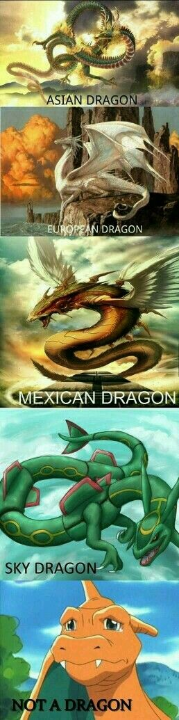 All type of dragons