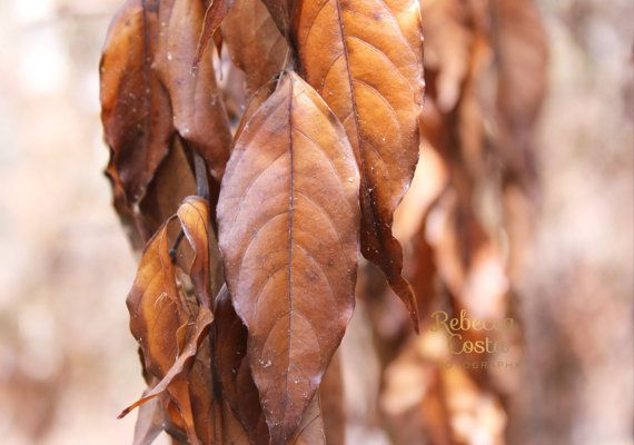 Autumn leaves Original Photography brown change of seasons tree nature leaf