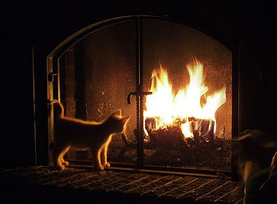 Heater and Fireplace Pet Safety - The Pet Wiki
