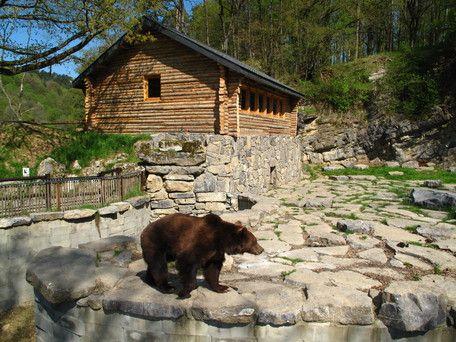 Overnacht in een Pelsjagershut! De beren Willy en Marlène hebben hun verblijf naast de hut. De hut is ingericht zoals een authentieke pelsjagershut eruit hoort te zien. Het is één grote ruimte van 60 vierkante meter die zowel als eetzaal als slaapzaal dienst doet.  #origineelovernachten #reizen #origineel #overnachten #slapen #vakantie #opreis #travel #uniek #bijzonder #slapen #hotel #bedandbreakfast #hostel #natuur #beren