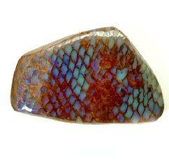 Fossilized snake skin in Boulder Opal Queensland, Australia