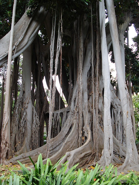 botanical gardens of tenerife