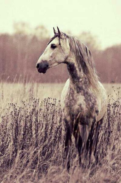 I want to jump on this horse and ride away.... far, far away....