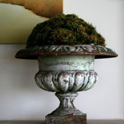 Grow moss