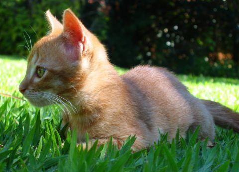 Animais Domésticos Como Cuidar