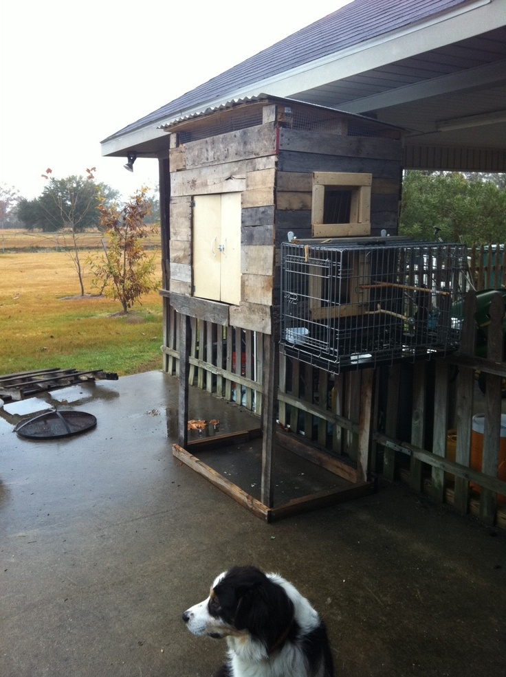 1000+ images about PIGEON LOFTS on Pinterest | Chicken ...