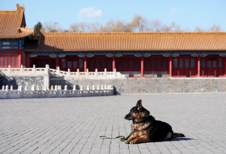 As China ushers in the Lunar Year of the Dog, hundreds of millions of Chinese are traveling to their hometowns to spend the week-long national holiday with their families.
