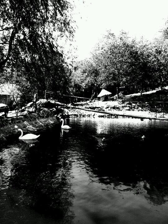 Swan- houseatheart.blogspot.ro