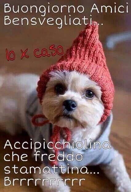 1116 best images about buongiorno buonanotte buona for Foto buongiorno amici