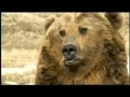 The Legacy of Bart the Bear