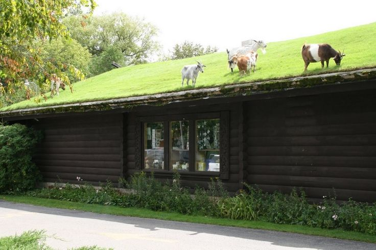 Al Johnson's Swedish restaurant complete with goat pasture on the roof. Door County Wisconsin