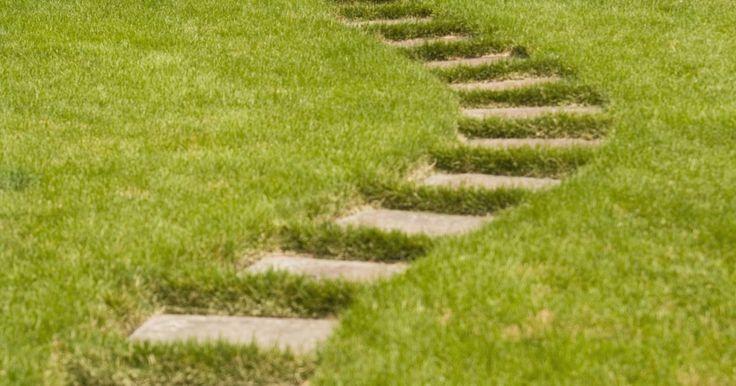 Cómo plantar una cerca natural con ligustros. Planta tu propia cerca natural con ligustros. Las plantas de ligustro (Ligustrum) son fáciles de cultivar, de cuidar y muy asequibles también. Tienen hojas perennes con follaje denso, y hermosas y aromáticas flores. Puedes elegir entre varios tipos de ligustro, como japonés (Ligustrum japonicum), el California (Ligustrum ovalifolium), el brillante ...