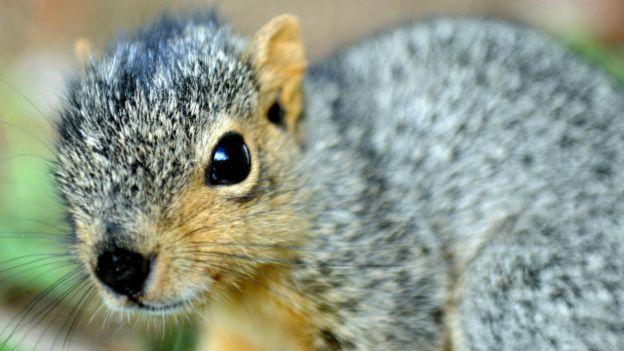 5 de los animales más astutos del mundo | GrandesMedios.com
