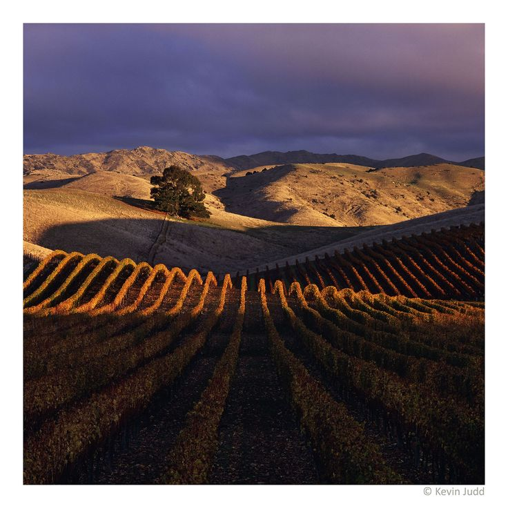 Yarrum Vineyard, Southern Valleys in Marlborough, New Zealand