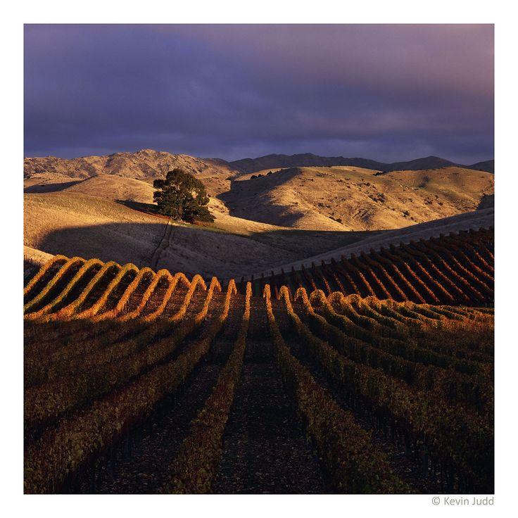 Yarrum Vineyard, Southern Valleys in Marlborough, New Zealand
