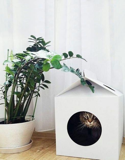 Maison pour chats                                                                                                                                                                                 Plus