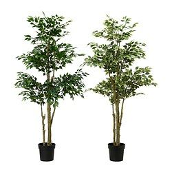 "FEJKA artificial potted plant, Weeping fig assorted species plants Diameter of plant pot: 8 ¼ "" Height: 67 "" Diameter of plant pot: 21 cm He..."