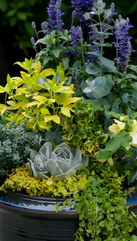 17 best images about container gardening ideas on