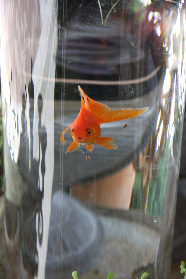 17 best images about koi fish pond water pond on pinterest for Pond size for koi