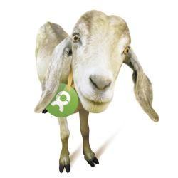 Zickenalarm...Ein Wunderwerk der Technik? Nein, Natur pur: Sparsam im Verbrauch, mobil und nach kurzer Einweisung leicht zu warten, produziert eine Ziege am laufenden Band Milch, wertvollen Dünger - und Nachkommen für eine ganze Herde, die vielen Menschen das Ein- und Auskommen sichert. Da gibt es nichts zu meckern!