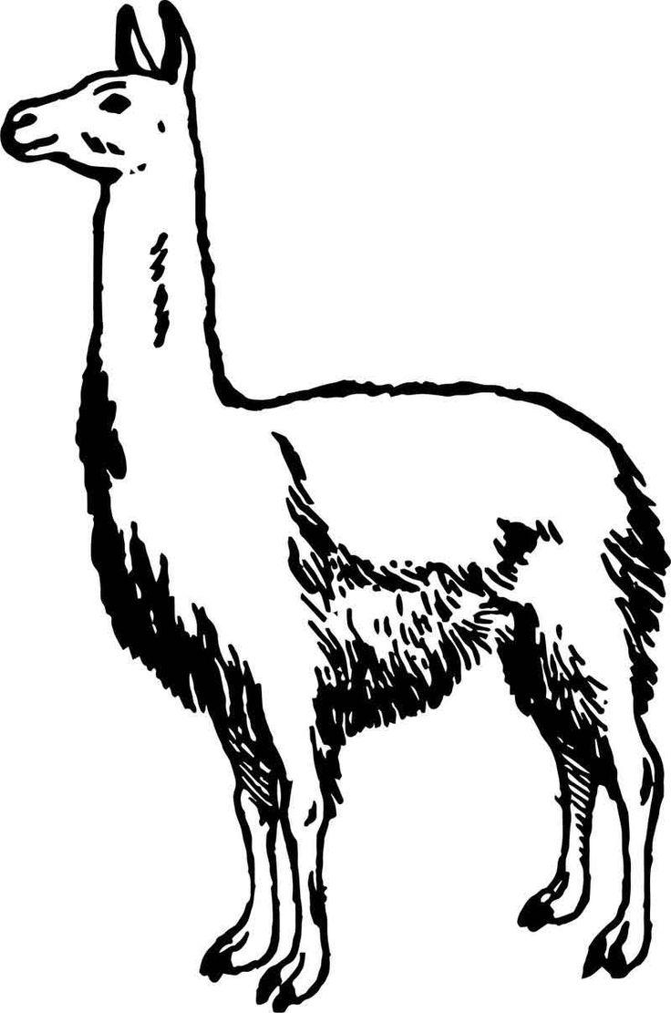 simple alpaca coloring page