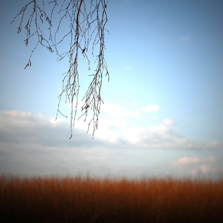 https://flic.kr/p/koouPZ | Beautiful spring sunset