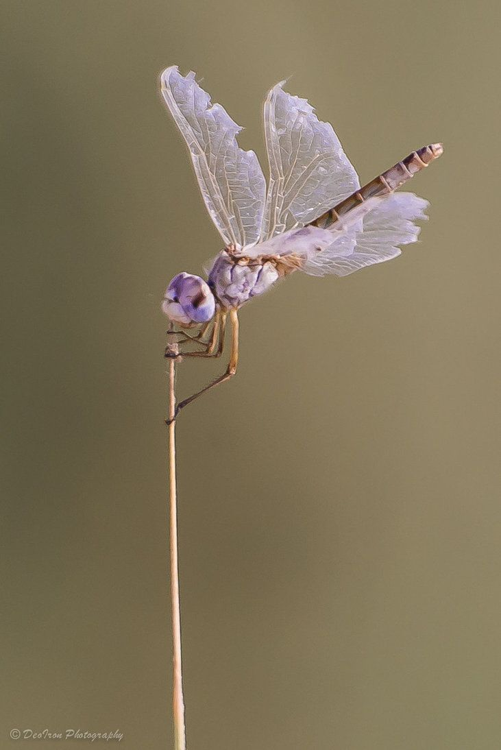 868 best dragonfly images on pinterest dragon flies butterflies