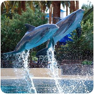 Siegfried & Roys Secret Garden and Dolphin Habitat – The Mirage Hotel and Casino (11-6:30)