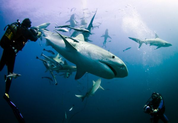 Sharks Bay !!! The seas of South Africa :) !!