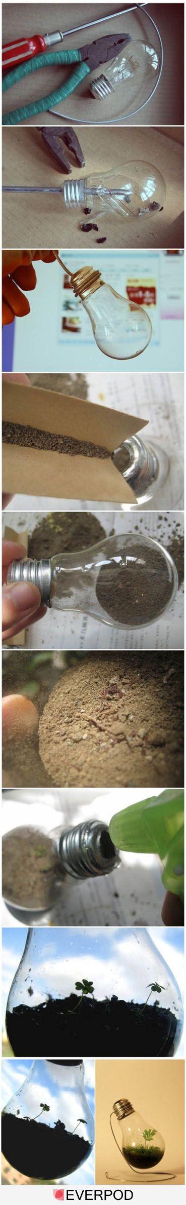 Mini Greenhouse in a lightbulb tutorial